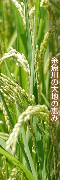 糸魚川の大地の恵み